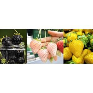 Kit de Cultivo Frutillas de Colores