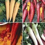 Kit de Cultivo Zanahorias de Colores